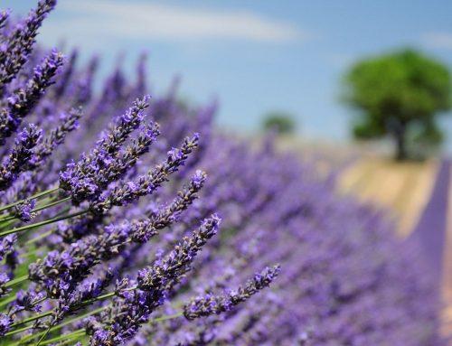 Découvrir la Provence